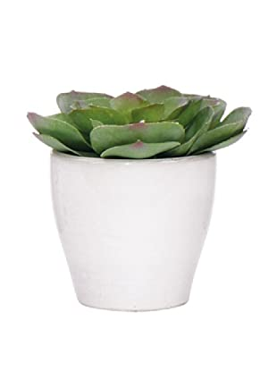 Lux-Art Silks Echeveria in White Pot, Green