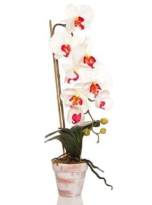 Concoral Maceta Orquídea Crema