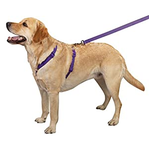 Zack & Zoey 1-Inch Nylon Dog Harness with Nickel-Plated D-ring and Plastic Buckles, Ultra Violet
