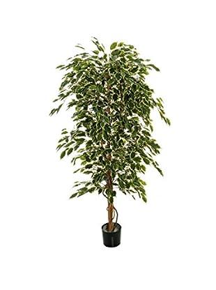 Ficus Pflanze grün 180 cm