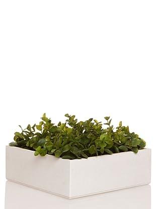 Concoral Concobox Eucaliptus Verde Verde