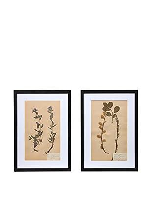 Pair of Framed Herbarium IX Artwork, Natural/White/Black