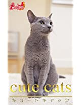 cute cats09 Russian Blue