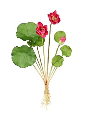 Bouquet Minilotus
