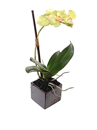 New Growth Designs Faux Phalaenopsis Orchid Plant