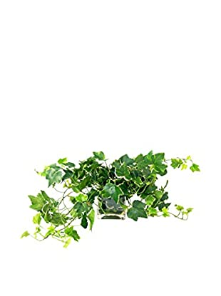 Creative Displays Variegated Ivy Cube, Green/Multi