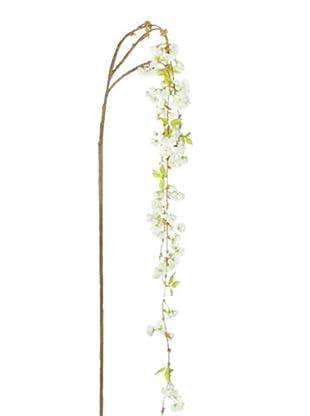 Sia Home Fashion Rama Phalaenopsis