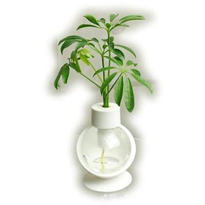 観葉植物 カプセルプランツ