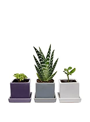 Chive Set of 3 Cubes & Saucers, Purple/White/Light Grey