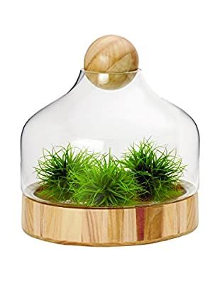 Torre Tagus Kiefer Glass Dome Wood Base Terrarium, Wide