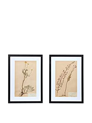 Pair of Framed Herbarium XXVII Artwork, Natural/White/Black