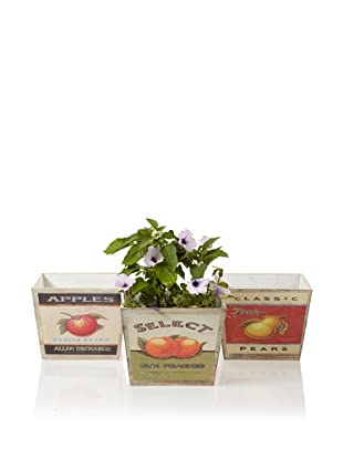 Wald Imports Set of 3 Wood Pot Covers with Retro Fruit Labels, Assorted