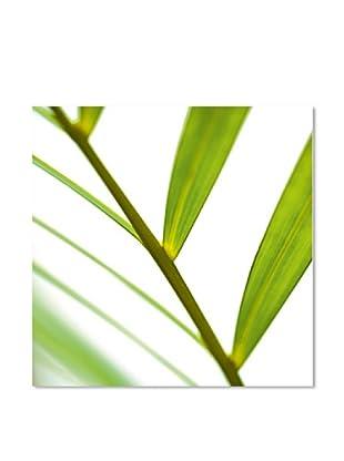 PlatinArt Cuadro Fragile Green 50 x 50