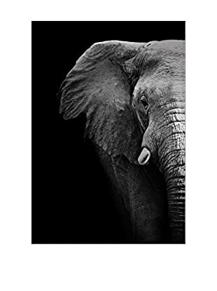 Elephant Close Up Photography On Mounted Metal