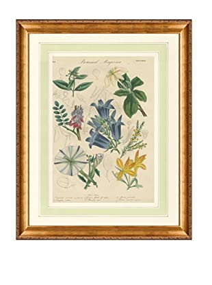 1837 Antique Hand Colored Blue Botanical Print II, French Mat