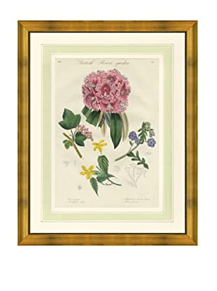 1837 Antique Hand Colored Pink Botanical Print IV, French Mat