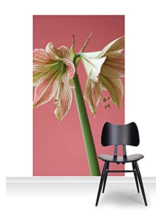 Clive Nichols Photography Exotic Star Mural (Accent)