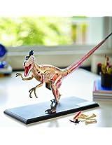Tedco 4D Vision Velociraptor Anatomy