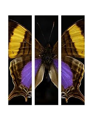 Art Addiction Acrylic Printed Butterfly Set III, Triptych