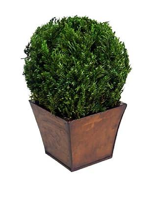 Forever Green Art Handmade Table Top Juniper Globe in Azar