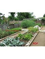Orto ecologico (Coltivare ortaggi ecologici)
