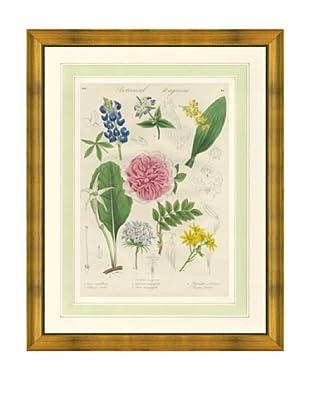 1837 Antique Hand Colored Pink Botanical Print V, French Mat