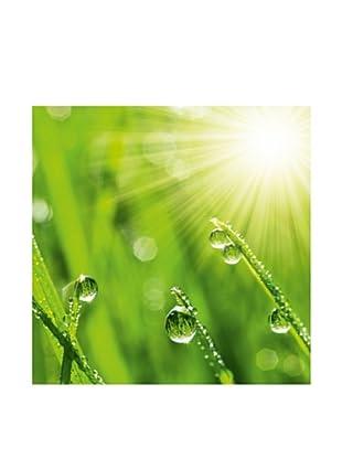PlatinArt Cuadro Drops In The Sunlight 30 x 30