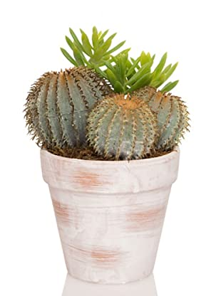 Concoral Maceta Set de 3 Cactus Finger Compo