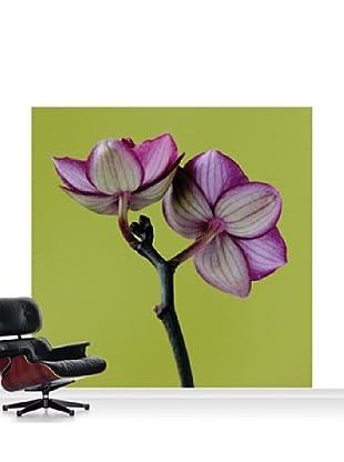 Clive Nichols Photography A Doritaenopsis Orchid III Mural, Standard, 8' x 8'