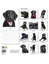 Black Labrador 2014 Wall Calendar