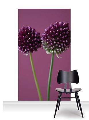 Clive Nichols Photography The Purple Flowers of Allium Sphaerocephalon Mural (Accent)