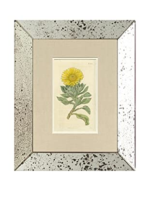 1816 Antique Hand Colored Yellow Botanical II, Mirror Frame