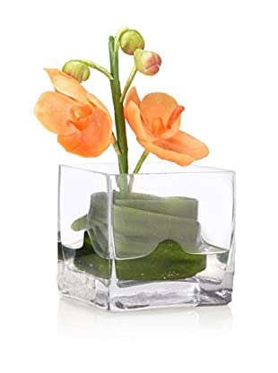 Flower Fusion Faux Orchid in Square Glass Container, Orange