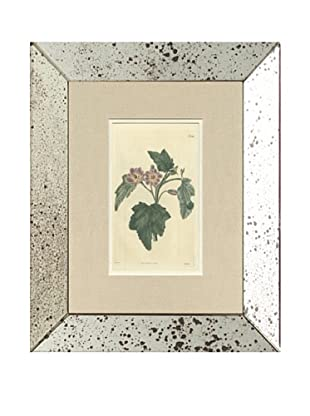 1825 Antique Hand Colored Purple Botanical II, Mirror Frame
