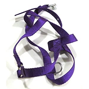 Body belt harness for puppies & small dogs