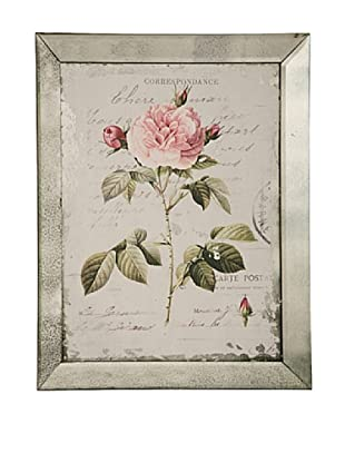 Winward English Rose III Framed Print