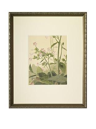 1903 Tabac Botanical Chromolithograph