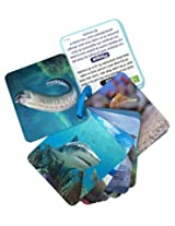 Animal Planet 3D Flash Cards - Marine Animals