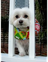 Puppy Bumper - Keep Your Dog on the Safe Side of the Fence-gingerbread Smiles Small up to 10""