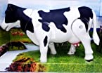 Milk Cow Moving Legs & Shake Tail Make Sound Big Size 12