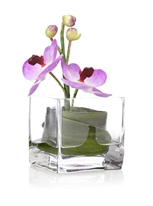 Flower Fusion Orchid in Square Glass, Purple