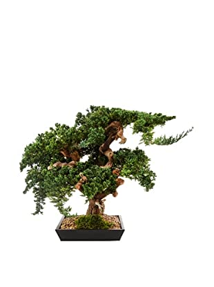 Forever Green Art Large Monterey Bonsai Tree