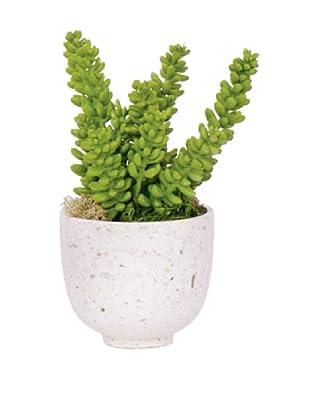 Lux-Art Silks Succulent in White Terrazo, Green