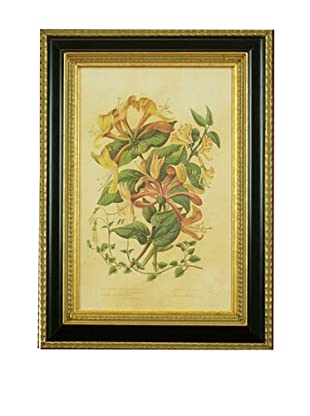 Framed Reproduction Botanical Art Print