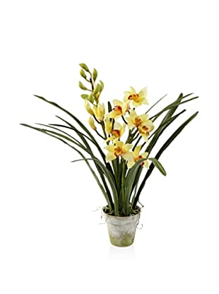 Winward Cymbidium in Clay Pot, Yellow