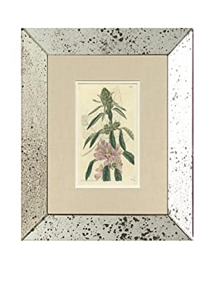 1825 Antique Hand Colored Pink Botanical III, Mirror Frame