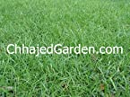 Mexican Carpet Grass Lawn Grass
