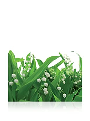 Brewster Komar Lilies of the Valley Wall Mural