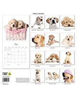Yellow Labrador 2014Wall Calendar