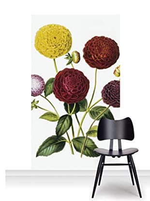 Royal Horticultural Society Dahlia Dwarf Mural (Accent)